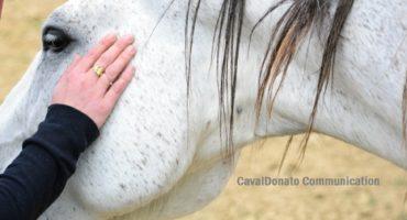 Vita da cavalli, vita con i cavalli secondo M. Franchini e M. Kiley-Worthington