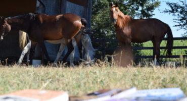 Equitare è Media Partner di Voci per i cavalli 2017