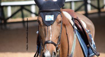 Calarsi nella mente dei cavalli, relazione come scambio reciproco