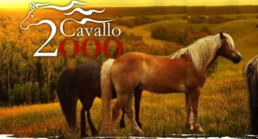 """Nuova Recensione a """"Un designer tra i cavalli"""""""