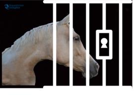 """Leggi l'estratto """"Il cavallino di Madreperla"""" dal nuovo libro di G. Gaibazzi"""