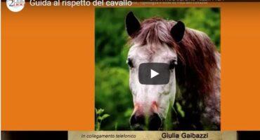 """Intervista a Giulia Gaibazzi, autrice di """"Guida al rispetto del cavallo"""""""